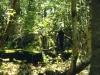 Foalhurst Woods 3
