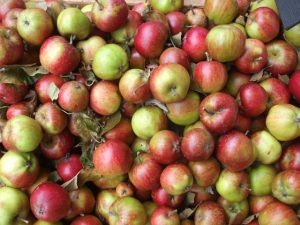 autumn-apples-1