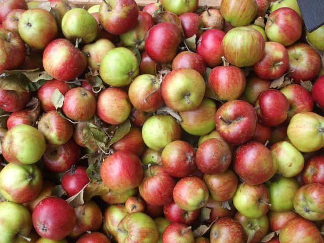 autumn-apples-1