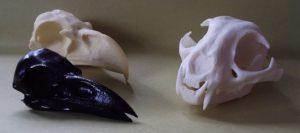 skulls-long